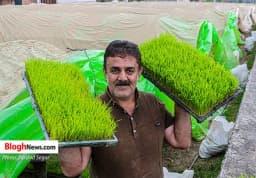 آماده سازی بذر شالی برای کشت مکانیزه در شرق مازندران  https://www.khazarnama.ir/آماده-سازی-بذر-شالی-برای-کشت-مکانیزه-در/