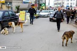 پرسه سگها در شهر چالوس   https://www.khazarnama.ir/پرسه-سگ%e2%80%8cها-در-شهر-چالوس/