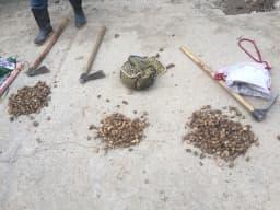 ماموران پارک ملی پابند متخلفانی که اقدام به برداشت غیرقانونی ثعلب از مناطق جنگلی پارک ملی پابند نموده بودند، شناسایی ودستگیر کردند. @mazanddoe
