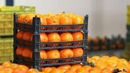رئیس سازمان صنعت، معدن و تجارت استان اردبیل گفت: توزیع ۸۰۰ تن سیب و پرتقال با کیفیت از ۲۵ اسفندماه در مناطق مختلف استان آغاز میشود. @sabalanirib