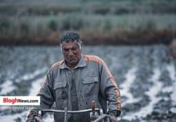 آماده سازی اراضی شالیزاری در شرق مازندران  https://www.khazarnama.ir/آماده-سازی-اراضی-شالیزاری-در-شرق-مازند/