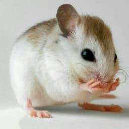 موش ها میتوانند آواز بخوانند, دقیقا مثل پرنده ها! فقط ما قادر به شنیدنش نیستیم...     🎱👽 #STARK 👽🎱 عجـ😨ــایب و ڋانــ🚷ـستنـے هـآ 👇🧐  🆔 sapp.ir/nakhoonakk❗️