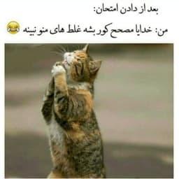 😁الهی آمین😂  🌏══🐻🐼🦊══🌏 @animal_knowledge 🌏══🐯🦁🐨══🌏