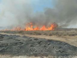 ✅مهار آتش سوزی در میانکاله  آتش سوزی  که در منطقه شور پناهگاه حیات وحش میانکاله روز پنج شنبه ساعت ۱۳ شروع شد،پس از چندساعت تلاش بی وقفه ماموران یگان حفاظت محیط زیست بهشهر و اداره کل که با تجهیزات تراکتور،لودر، خودرو آتش نشانی محیط زیست و بندرامیرآباد حضور داشتند،ساعت ۱۷  به طور کامل آتش سوزی مهار کردند. وسعت آتش سوزی حدود ۷ هکتاربوده که  ۸۰ درصد سازیل ، ۲۰درصد انار طعمه حریق شدند.   @mazanddoe